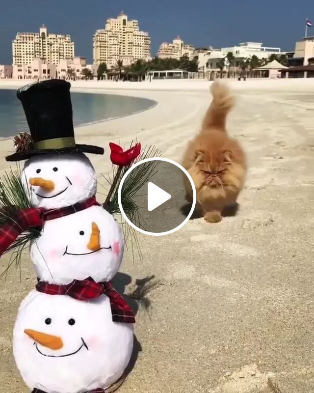 Cat Traveling On The Beach And Beautiful Hotels - Video & GIFs   cats, animals, pets, sea travel, beaches, beautiful hotels