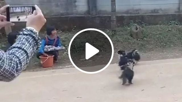 Smart Phone Records Acrobatic Dogs On The Street - Video & GIFs | Smart phone, recorder, dog, adorable, animals, pets, acrobatics, street
