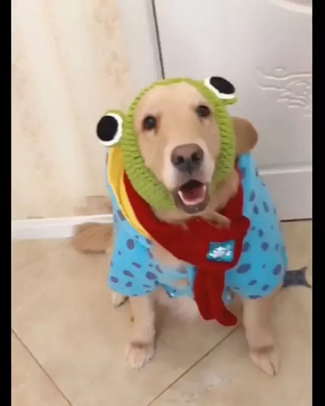dog transformed into a lovely frog.