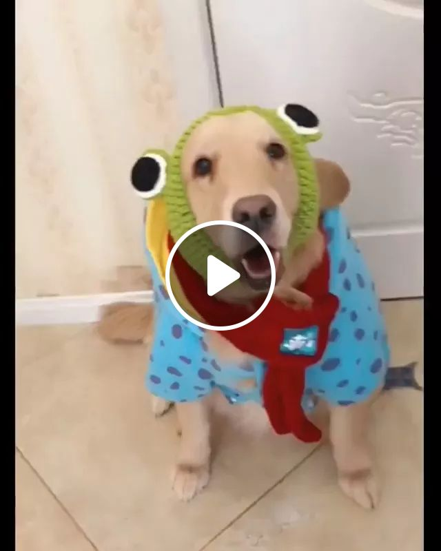 Dog Transformed Into A Lovely Frog. - Video & GIFs   dog, costume, frog, lovely, dog clothes, pet accessories