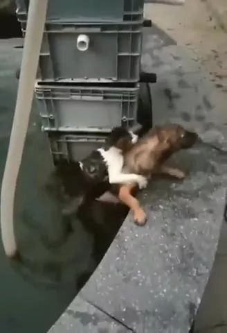 hero dog saves cat from water tank - Video & GIFs   dog, hero, rescue, cat, adorable, pet, friendly, escape, water tank,
