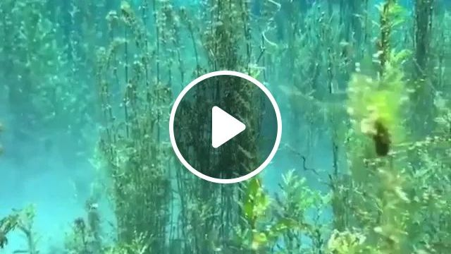 Wow! That Is Some Quality H20 - Video & GIFs | nature, water, fresh water