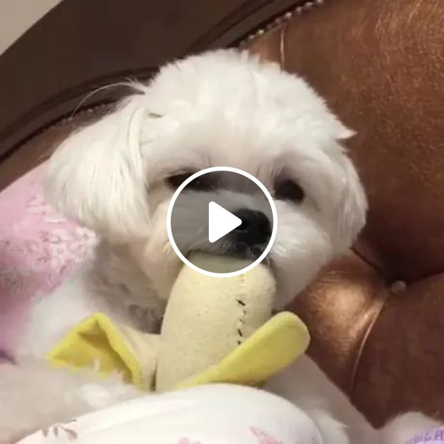 When Your Girl Is Tired But You Promised Her A New Smart Phone - Video & GIFs   dog, animals, pets, health, care