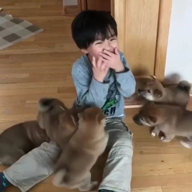 Puppies and baby playing in living room are very happy