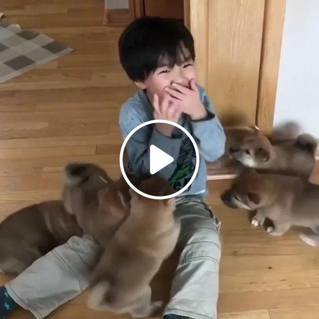Puppies And Baby Playing In Living Room Are Very Happy - Video & GIFs | Cute puppies, dog breeds, cute babies, baby clothes, living room furniture, wooden floors