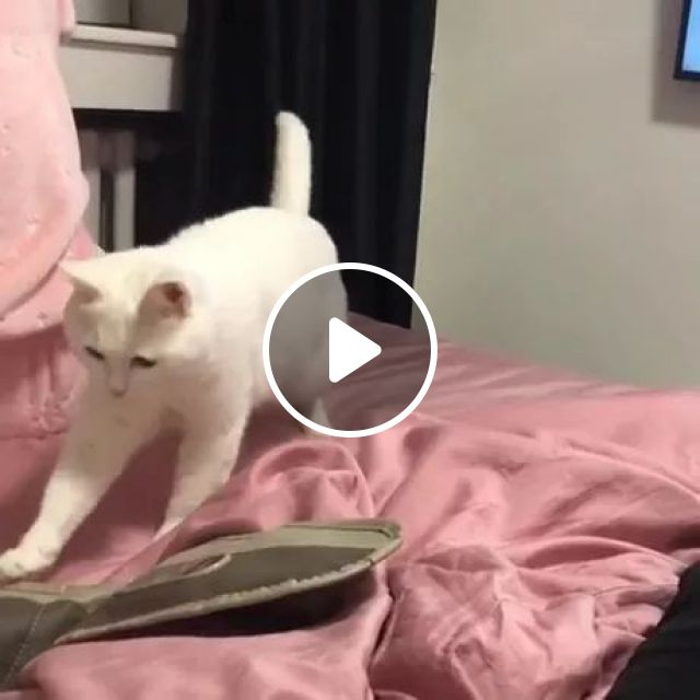 Lovely Cat On A Luxury Bed - Video & GIFs | cat, lovely, pet, cat breed, adorable, bedroom, bedroom furniture, luxury bed