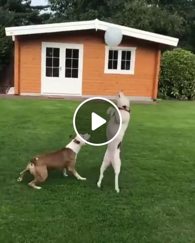 Dogs Playing With Bubble In Their Yard - Video & GIFs | Smart dogs, bubbles, home yards, luxury apartments