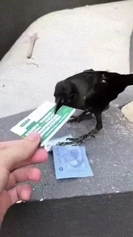 crow also knows about money and exchange
