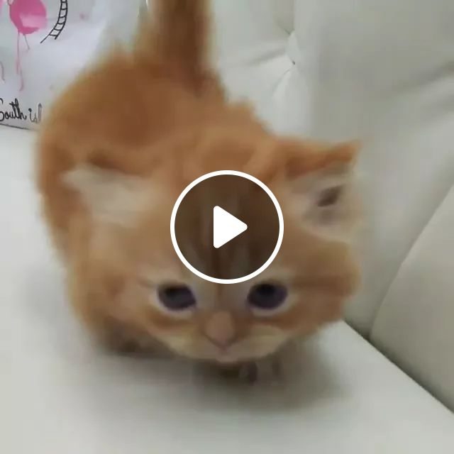 This Is Actually Adorable - Video & GIFs | cat, kitty, adorable