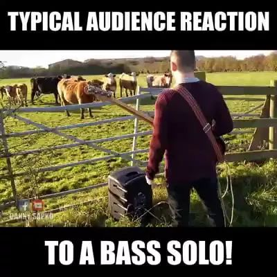 a man performs guitar in front of cows on the farm