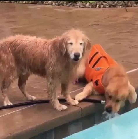 Dog not sharing his water with his brother
