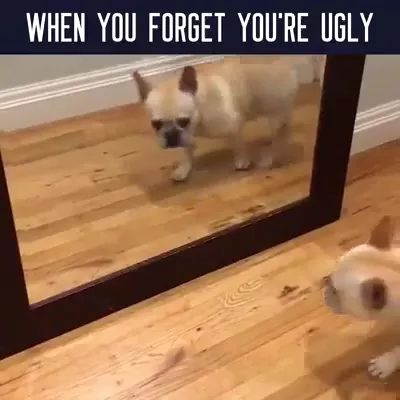 puppy stands in front of mirror and sees himself