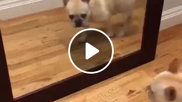 Puppy Stands In Front Of Mirror And Sees Himself - Video & GIFs   adorable, animals, pets, mirrors, beauty tools