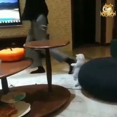 Girl practicing yoga with cat in living room