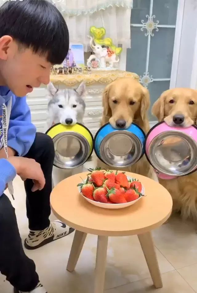dogs together eat strawberries