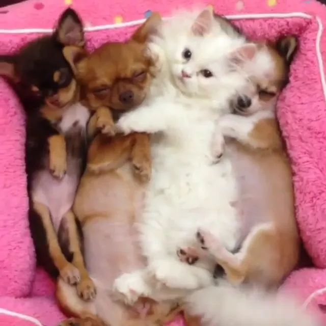 when yall pass out on me in mid-sentence at work - Video & GIFs | Cute kittens, cute puppies, dog breeds, friendly animals, pets