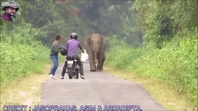 elephant followed two men riding a motorcycle