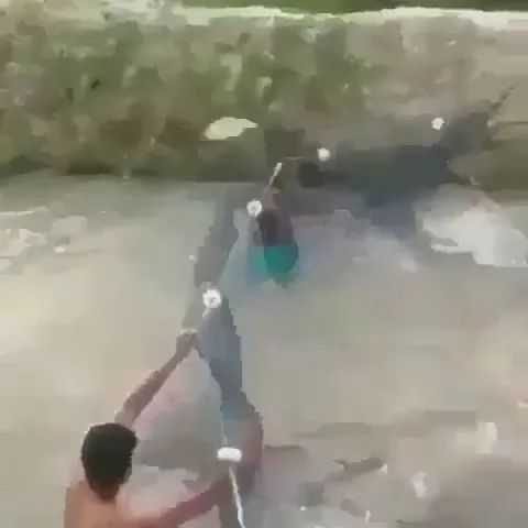 There are many fish in river