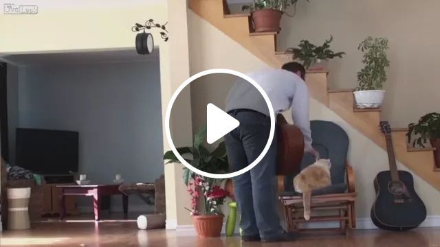 When cat feels unhappy in apartment, cat smart, wooden stairs, flower pots, luxury apartments
