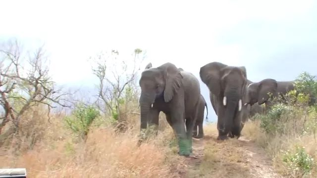 Friendly elephants in forest in Africa - Video & GIFs   Friendly elephants, forest, Africa travel, off road vehicles