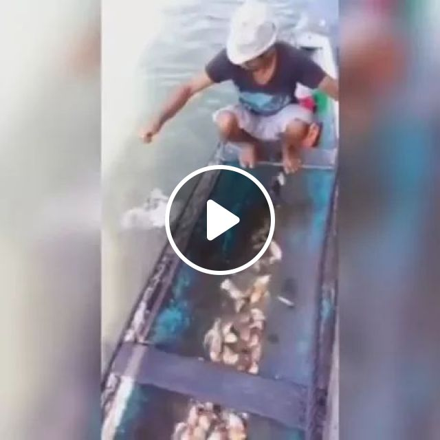 How Easy It Is to Catch Piranhas - River Monsters, Fish river, fish breed, African river, African tourism