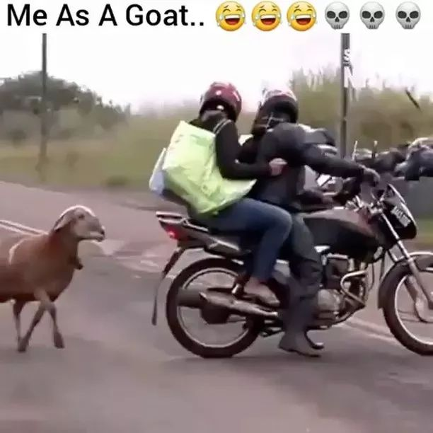 Goat attacks people on Indian street