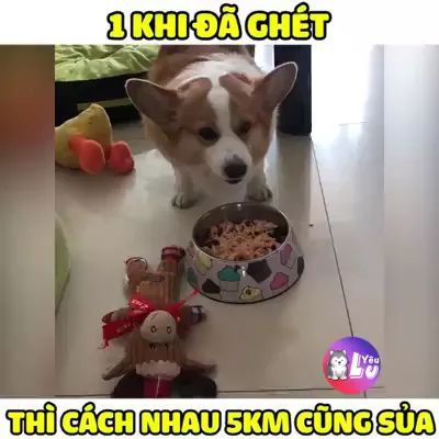 Dogs don't like to eat close together