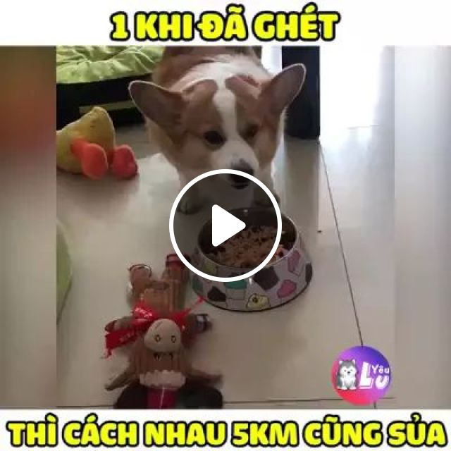 Dogs Don't Like To Eat Close Together - Video & GIFs   Dog breeds, cute animals, dog food, pet care