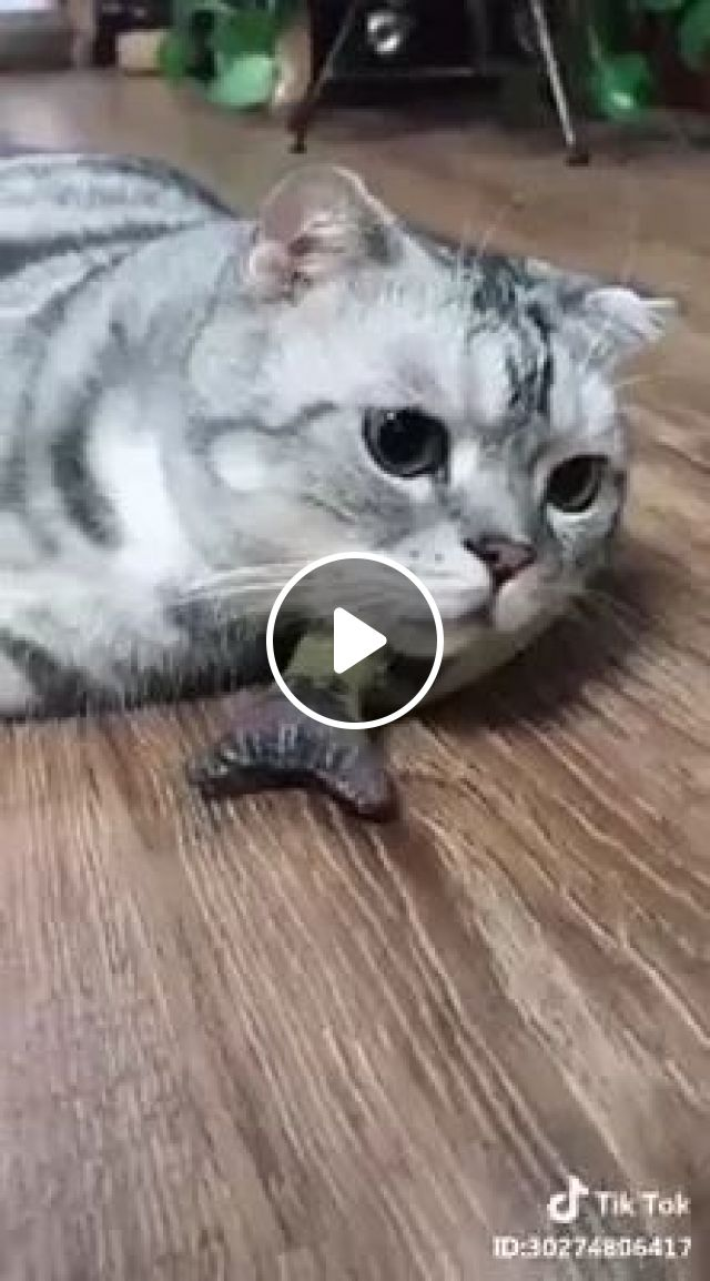 In Summer, Cooling Technology Makes Cats And Mice Friendly - Video & GIFs | Summer, the technology of cooling, technology, electricity, cat, mouse, friendly