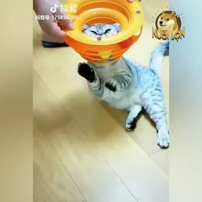 Cat likes to play with baby toys in bedroom