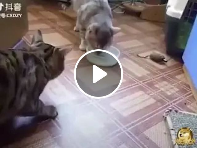 cat gave way to food in living room