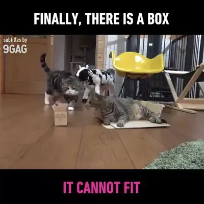 cat tries to stay in a carton box, in living room