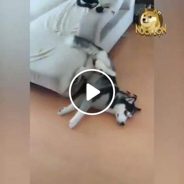 Dog does not like shoes and socks