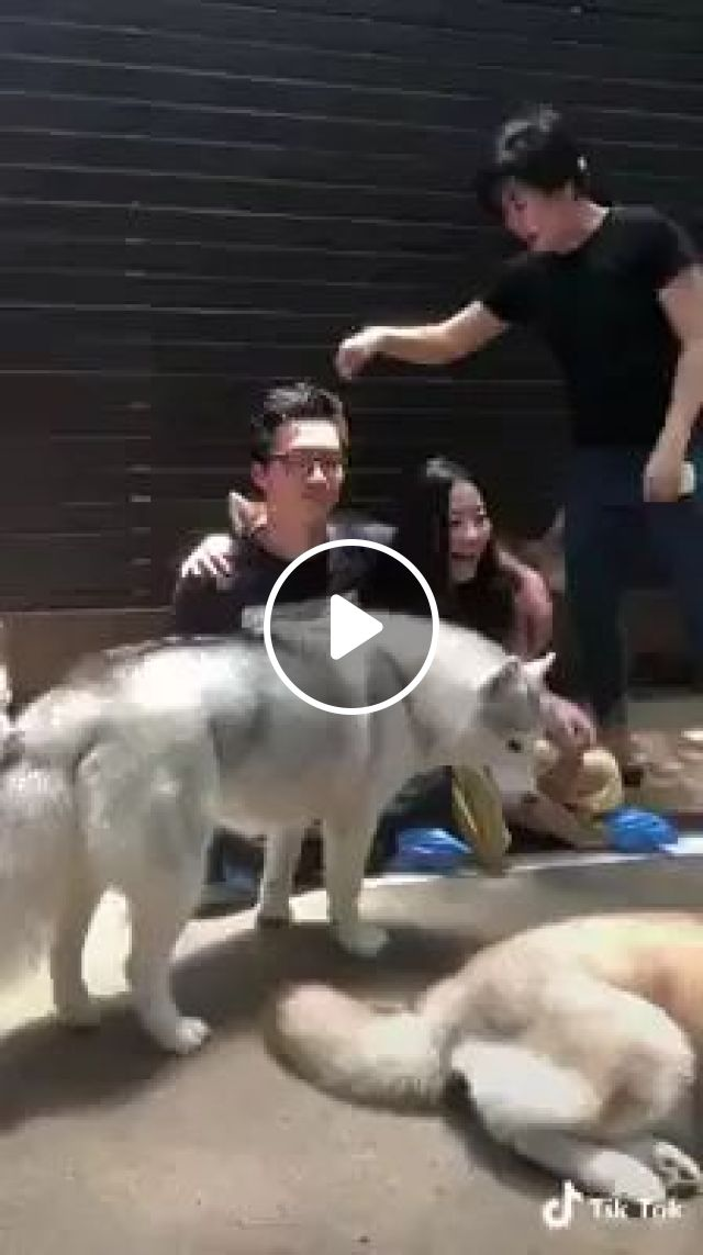 Tourists take photos with dogs