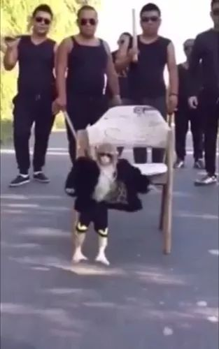 Cool monkey and men on the street - Video & GIFs | animals, animals, pets, men, fashionable clothes, spanish streets