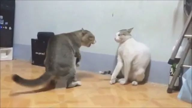 Together cats exercise weight loss to protect health