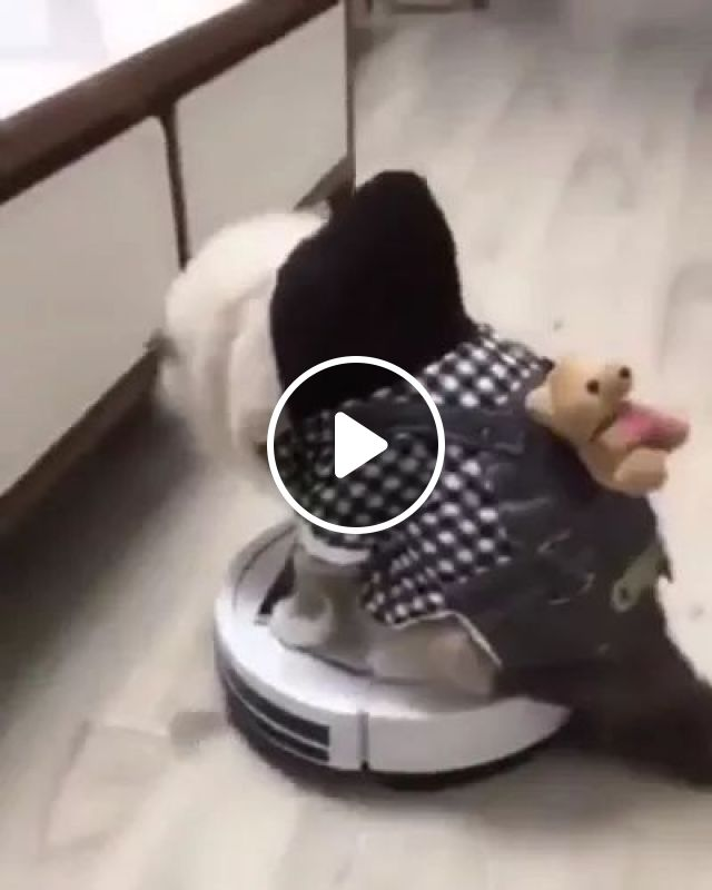 Cats like to stand on an automatic floor cleaner, Cats, automatic floor mopping machines, floors, luxurious furniture