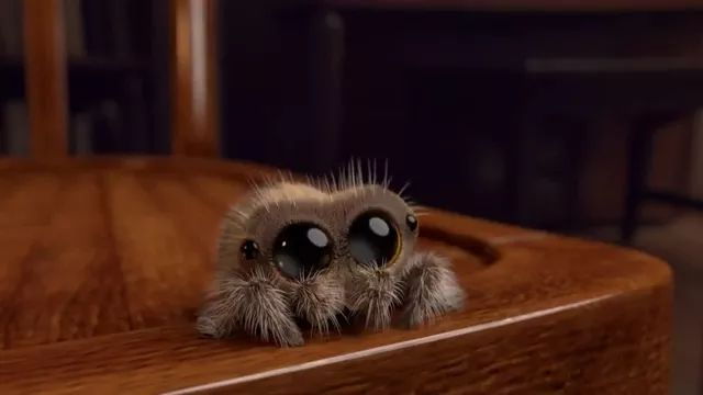 spider has big eyes moving in living room