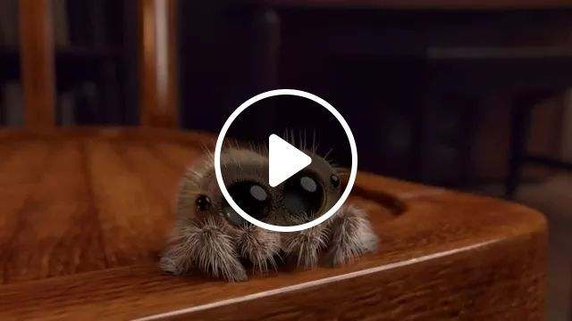 spider has big eyes moving in living room, Spider, animal, living room, luxurious interior