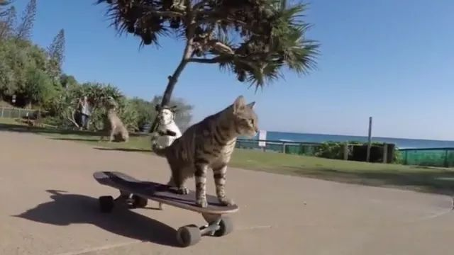 During tour, skateboarding cats go on the coast