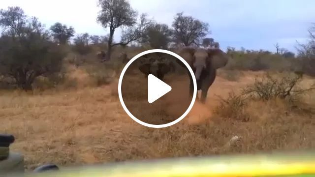 Friendly Elephants In A Park In Africa - Video & GIFs | Friendly elephants, parks, Africa travel, off road vehicles