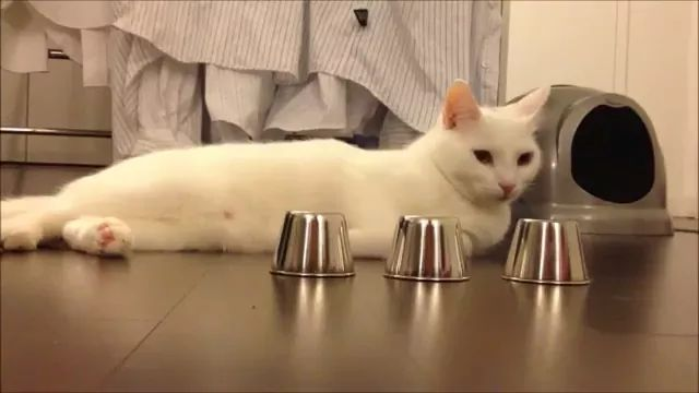 Smart Cat finds food in iron glass