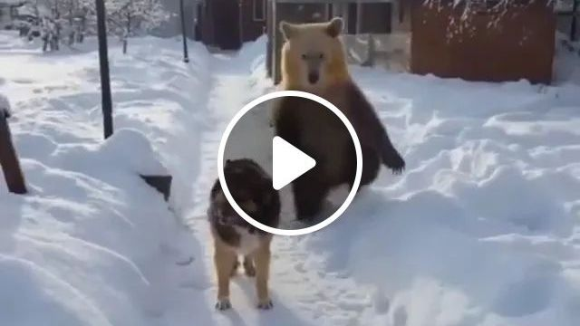 on the snowy road, bear followed dog to look friendly., path, snow, bear, follower, dog, look, very friendly, street lamp, pet, house