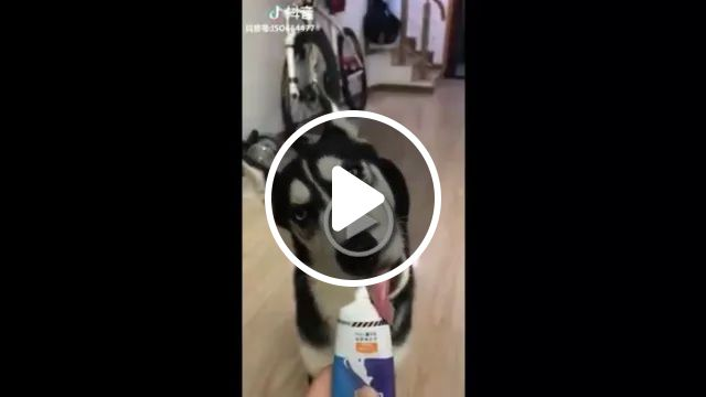 Dog Eats Dog Food, Food Looks Delicious - Video & GIFs | Dog breeds, friendly animals, dog food, delicious food
