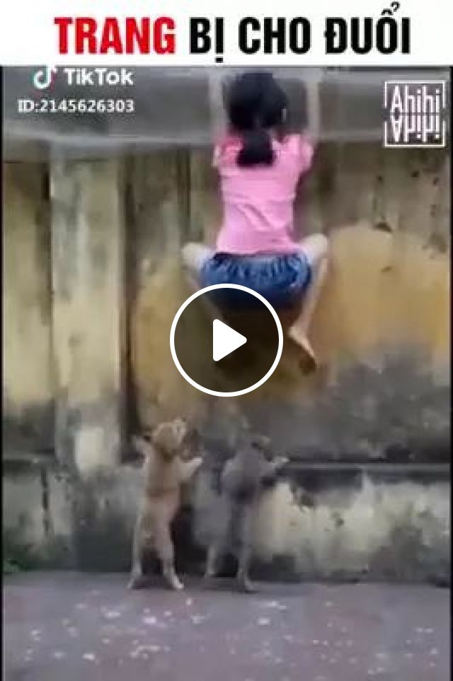 child is climbing over wall to escape puppies