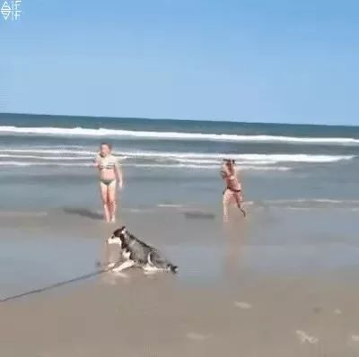 During a beach trip, dog likes beach and rolls on the sand
