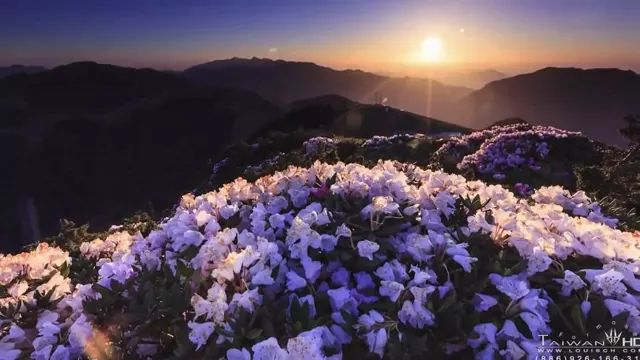 Flowers blooming on high mountains, it is wonderful