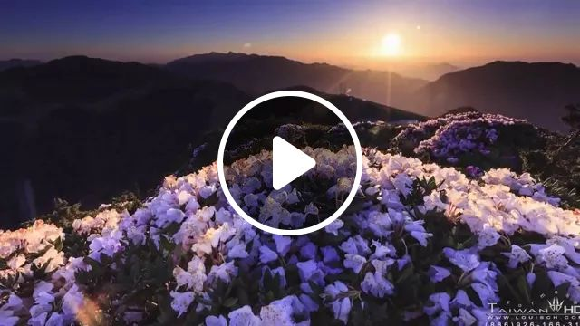 Flowers blooming on high mountains, it is wonderful, flowers, blooms, high mountains, wonderful, nature, Asian travel, fresh air