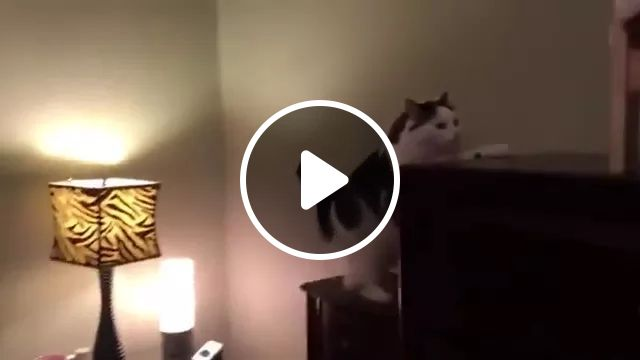 Cat Has A Nice Bed In Bedroom. - Video & GIFs | Cats, animals, pets, cat breeds, have a nice bed, bedroom, bedroom furniture, decorative lights