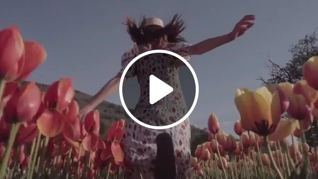 Girl Walks On The Flower Field, On A Trip - Video & GIFs | girl, female fashion, flower field, Netherlands travel